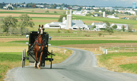 Picture of a Horse & Buggy on a Country Road