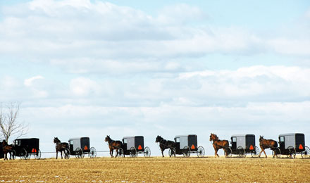 Picture of Horse & Buggys on a Country Road