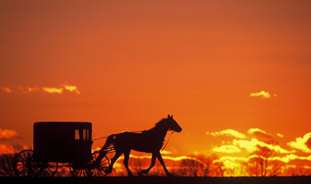 Sunset Picture of a Horse & Buggy